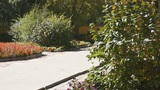 Heihe University. Autumn trees 01 Footage