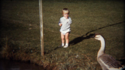 1971: Cute toddler boy chases geese at public lake park Footage