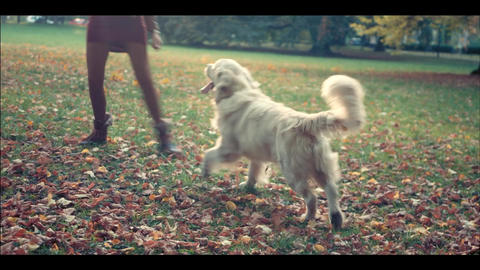 Woman with a golden retriever resting in the autumn park Footage