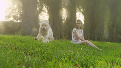 Pregnant woman with a dog Filmmaterial