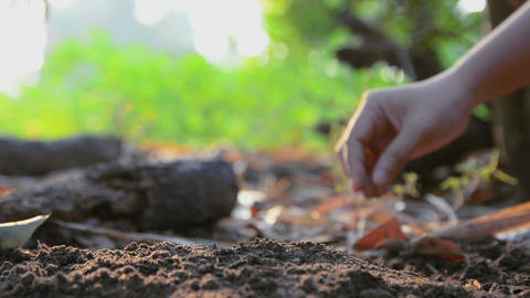 Hands of woman planting the seeds on earth ground and watered with nature ambien Footage