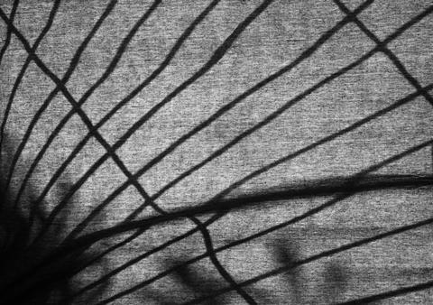 Silhouette of a lattice on a fabric Photo