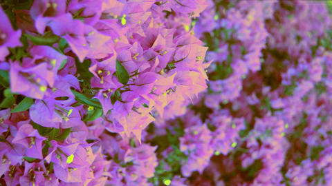 Cinematic Flowers Swinging In The Wind On A Wall Image