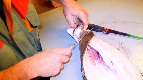 Hands cut fresh cod fish, remove and check livers. Hands control viscera and sep Footage