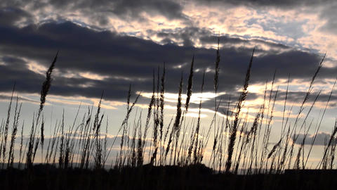 Dried herbs in the wind, a sky with clouds 3 Footage