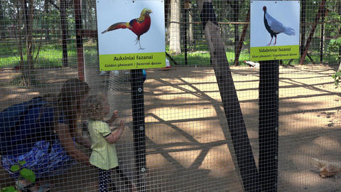 Woman with daughter enjoy at exotic birds in zoo cage Stock Video Footage