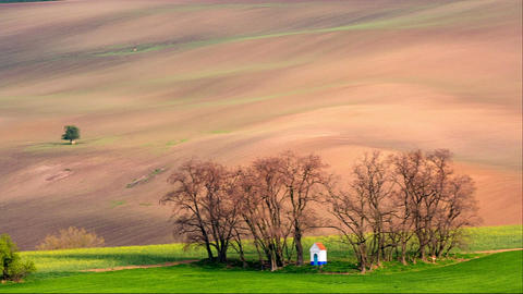 Lines and waves with trees and chapel in the spring, South Moravia, Czech Republ Image
