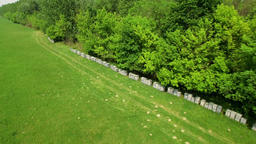 Aerial: aerial view of beehives lined up next to forest entrance Archivo