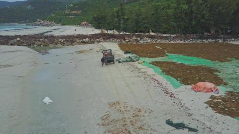 Small Pickup Stops to Load Algae Sacks at Dusk Footage