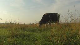 Carpathian Cow Pasture Grass Filmmaterial