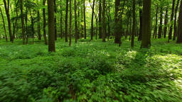 Camera moving forward through the forest, low over forest floor covered in green Footage