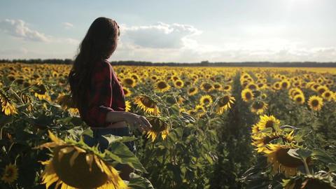 Young woman walking away in sunflower field Footage