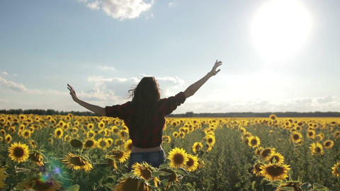 Charming woman enjoying leisure in sunflower field Live Action