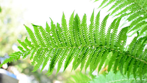 Fern leaf Footage