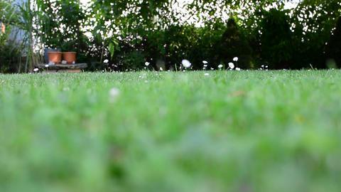 Lawn in garden Live Action