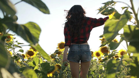 Sexy young woman running through sunflower field Footage