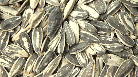 Sunflower seeds. Vertical and smooth movement of the motorized slide, on the Sun Footage