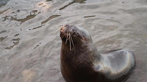 Sea lion Footage