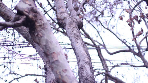 Trees and electric cables Footage
