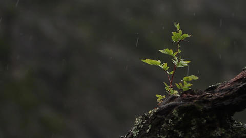 Branch in rainy forest Footage