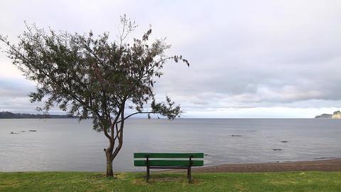 Ocean landscape wth tree Footage