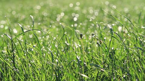 Wet grass blades Footage