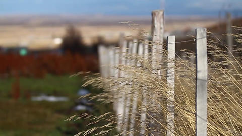 Fence with vegetation Footage