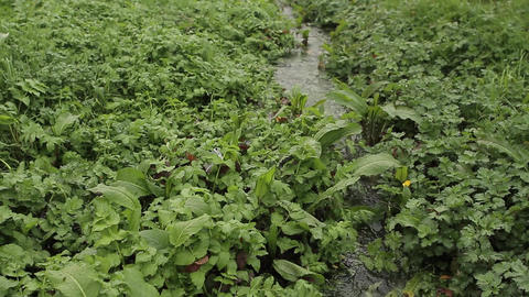Riverbed vegetation Footage