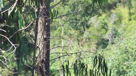 Falling tree Footage