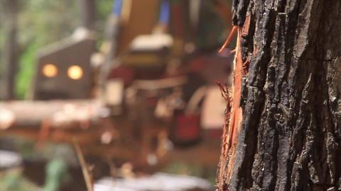 Forest machines Footage