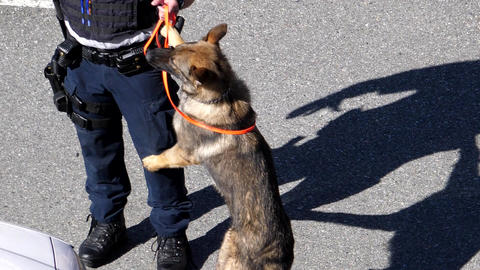 Slow motion of policemen training his police dog at parking lot Footage