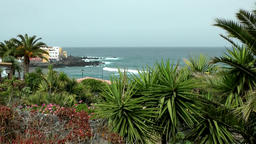 Spain The Canary Islands Tenerife palm trees in the bay of Puerto de la Cruz Footage