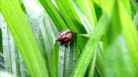 Snail fast moving on green nature Footage