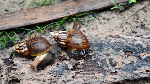 Snail fast moving on green nature Filmmaterial