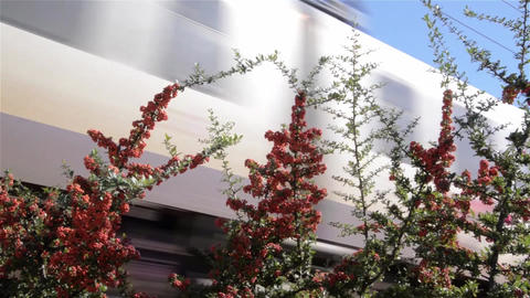 High-speed train passing through the sea buckthorn bushes Footage