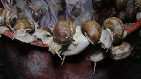 A herd of snails climbing a red wall in an attempt to escape from the trap 7 Footage