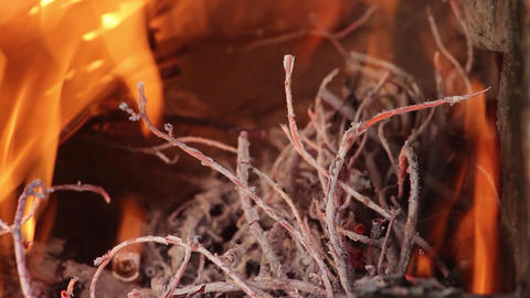 Dry branches of trees burning high heat with red flames Fire is seen almost 36 Footage