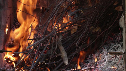 Dry branches of trees burning high heat with red flames Fire is seen almost 37 Footage