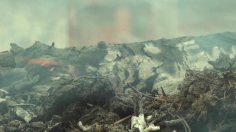 Smoke dry twigs burning fire burning Coals of wood burned 24 Footage