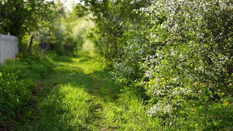 Path In The Grass, Flowering Bush stock footage