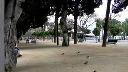 Spain The Canary Islands Tenerife child runs between doves in city park Footage