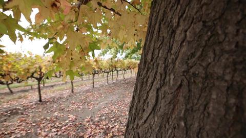 Tree bark close up tilt-up Footage