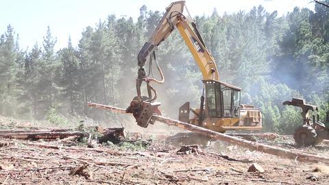 Machine handling logs Footage