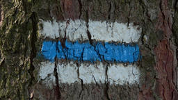 Tourist sign on the tree bark. Colorful tourist sign or mark on tree for hiking  Footage