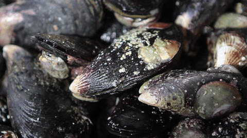 Mussels Footage