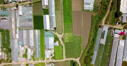Aerial Drone View Of Agricultural Vegetables Fields Plantation And Greenhouses Image