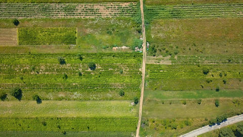 Aerial Drone View Of Green Agricultural Cultivated Fields Footage