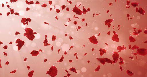 Flying Romantic Light Red Rose Flower Petals Falling Background Loop 4k Animation