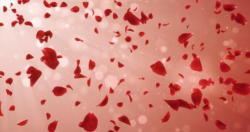 Flying Romantic Light Red Rose Flower Petals Falling Background Loop 4k Animation