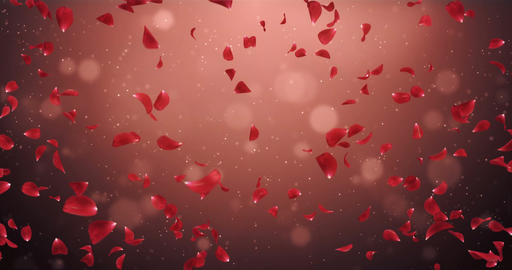 Flying Romantic Dark Red Rose Flower Petals Falling Background Loop 4k Animation
